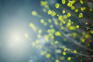 春天,叶子,山毛榉树,花蕾,落叶树,枝,嫩枝,明亮,自然纹理,新生活