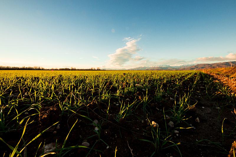 绿色,田地,天空,干草,草坪,夏天,干的,明亮,农作物,黎明
