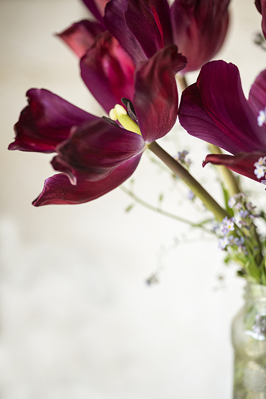 郁金香,古典式,英格兰,玻璃,自然美,菜园,图像,密封的,棚,小屋