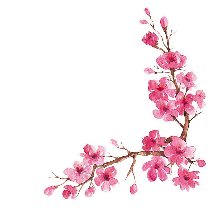 枝,樱桃树,可爱的,自然,季节,粉色,浪漫,技能,图像,花瓣