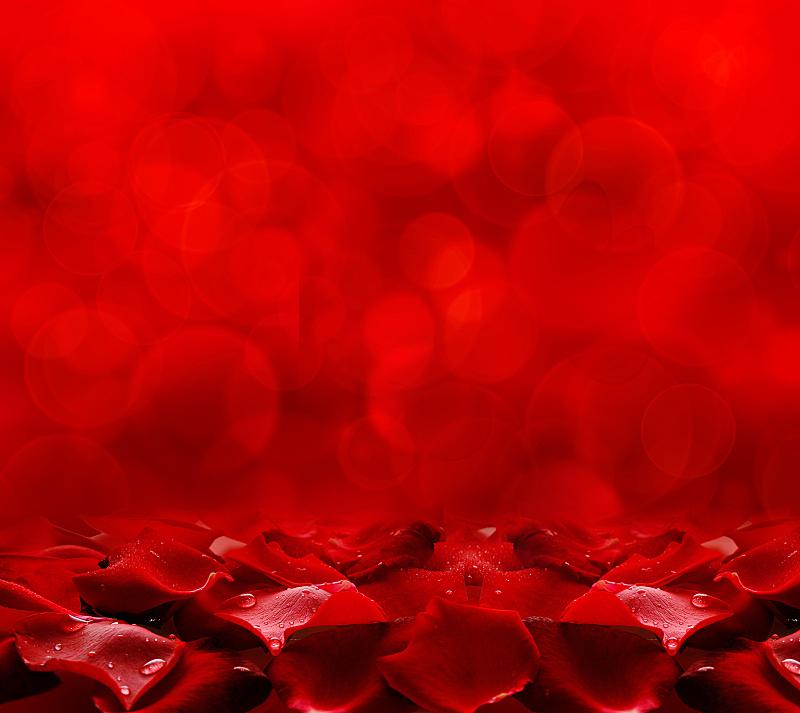 红色,玫瑰花瓣,红色背景,玫瑰,情人节卡,情人节,水平画幅,仅一朵花,彩色背景,植物