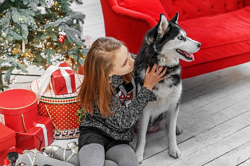 雪橇犬,儿童,可爱的,女孩,室内,美,新的,水平画幅,圣诞树
