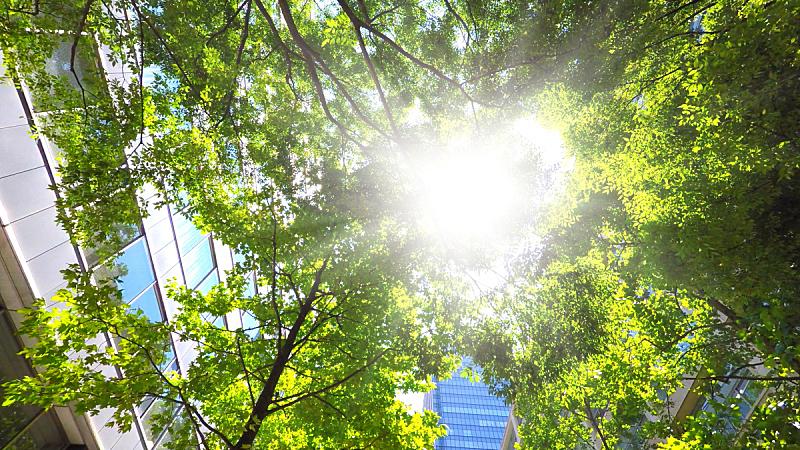 办公大楼,垂直画幅,外立面,环境保护,透视图,绿色,天空,未来,枝繁叶茂,夏天