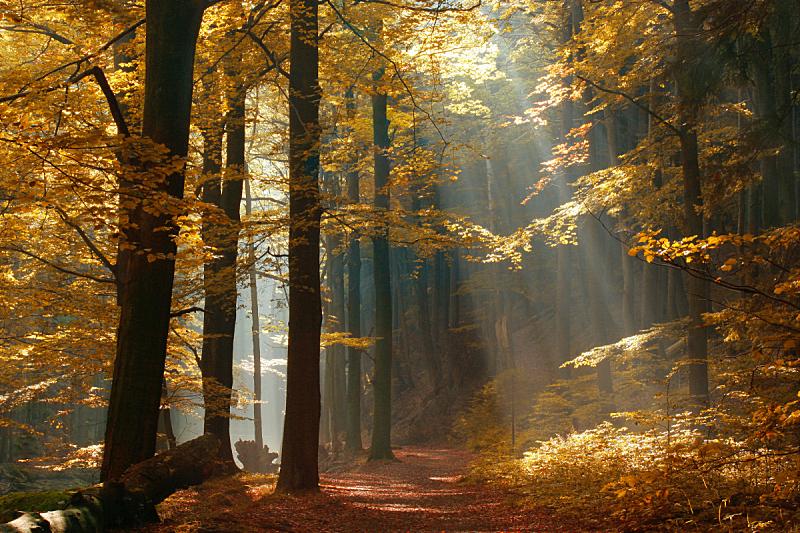 小路,森林,秋天,阳光光束,叶子,改换颜色,水平画幅,山毛榉树,户外,活力