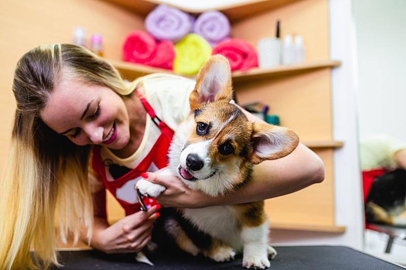 宠物美容店,可爱的,纯种犬,一个人,狗,哺乳纲,女人,头发,动物,理毛行为