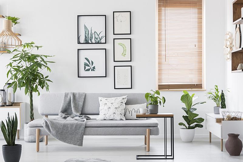 明亮,沙发,植物,毯子,百叶帘,窗户,灰色,木制,软垫,室内