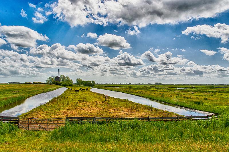 荷兰,地形,圩田,沟,水平画幅,运河,夏天,户外,草,芦苇