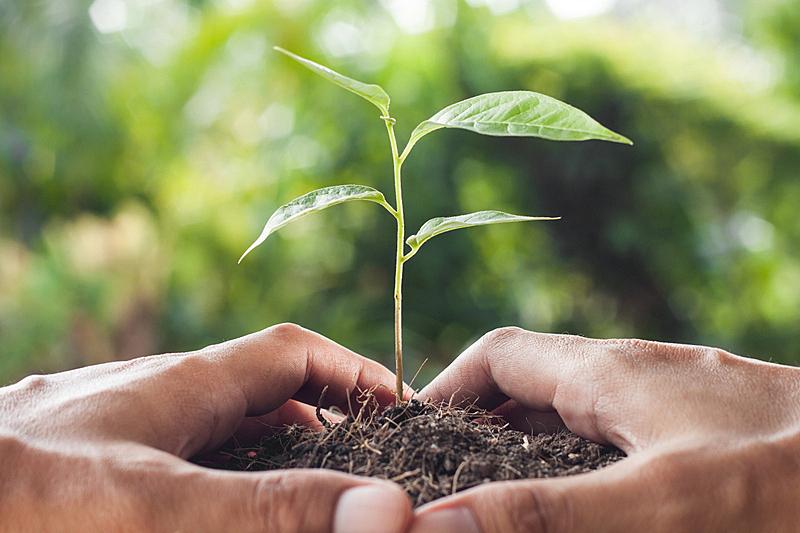 植物,手,幼小动物,拿着,可持续资源,道德,水平画幅,能源,泥土,户外