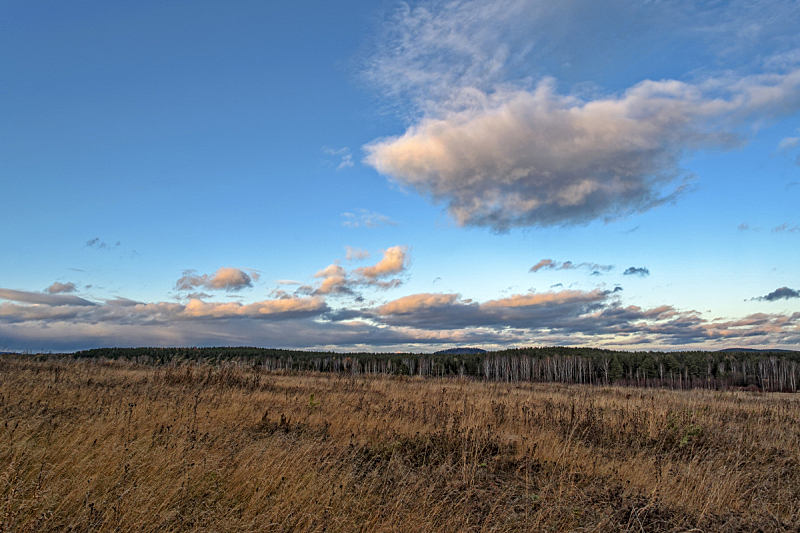 草,背景,天空,草地,地形,森林,秋天,干的,农业,食品