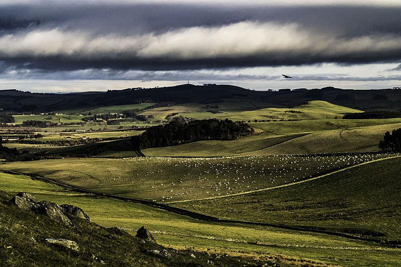农业,绵羊,石墙,水平画幅,枝繁叶茂,云,山,苏格兰边界,无人,苏格兰