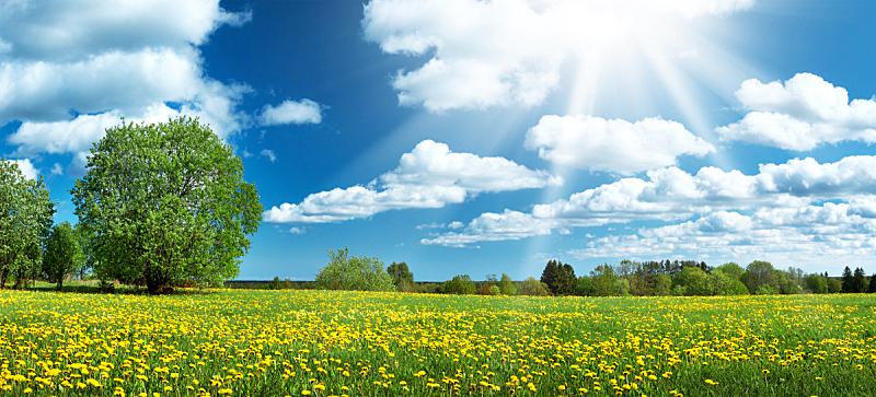 蒲公英,天空,田地,蓝色,云景,环境,云,仅一朵花,公园,草