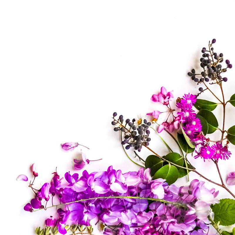 仅一朵花,春天,背景,美,艺术,无人,优美,标签,夏天,明亮