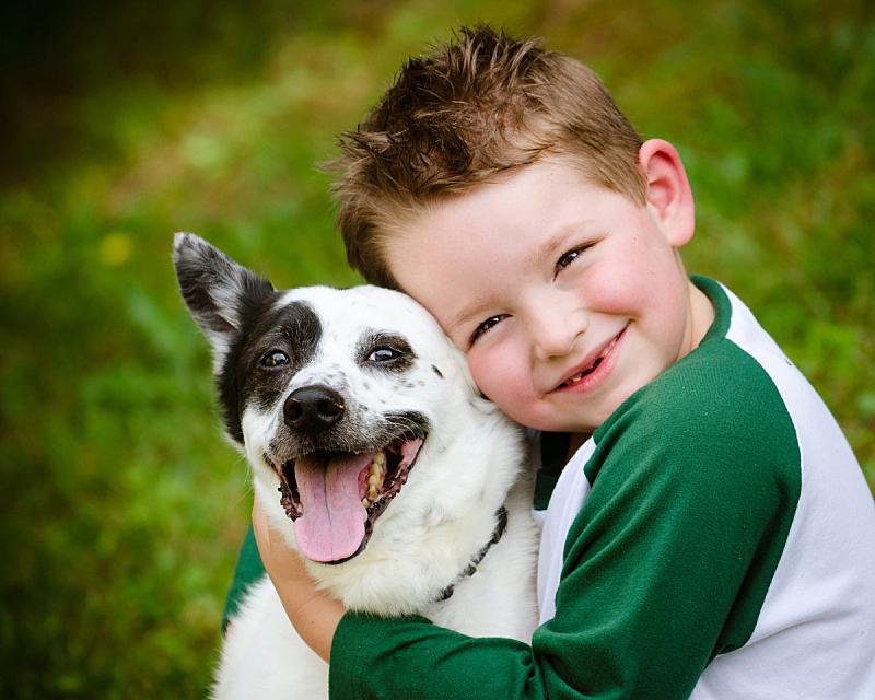 宠物,狗,儿童,澳大利亚斗牛犬,男孩,动物,公园,青春期,水平画幅,草坪