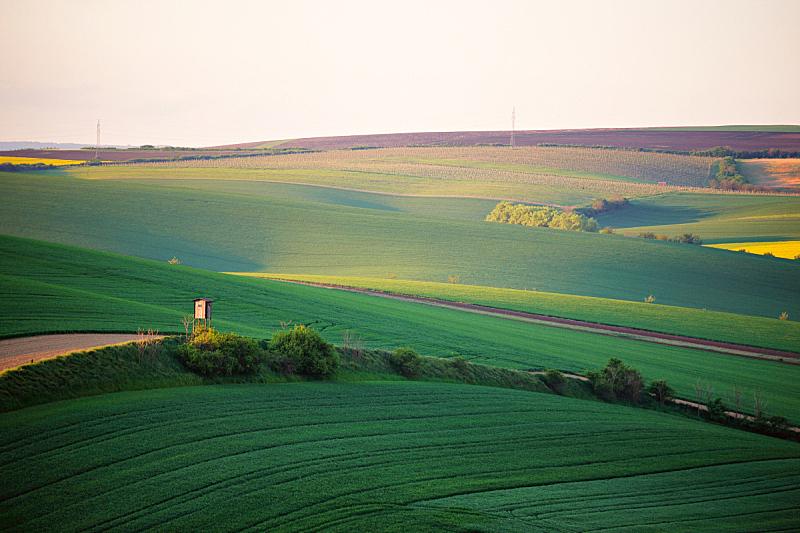 春天,田地,自然美,丘陵起伏地形,公园,摩拉维亚,小木屋,油菜花,农业,环境