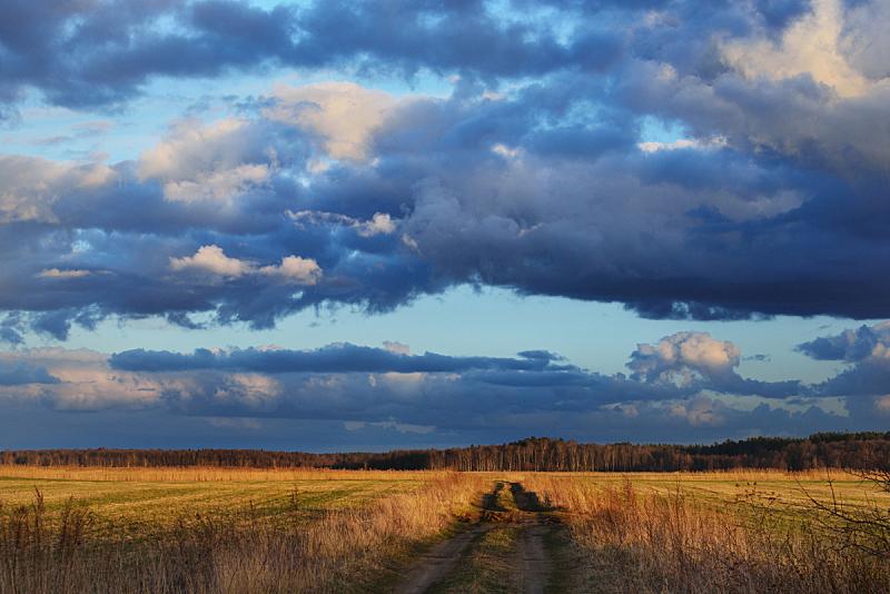 多云,田地,在上面,重的,自然,草地,水平画幅,无人,蓝色,早晨
