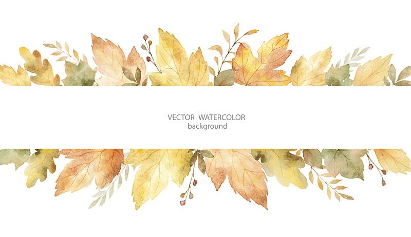 叶子,矢量,秋天,枝,分离着色,白色背景,水彩画,水,贺卡