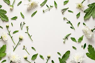 植物学,背景,太空,边框,水平画幅,高视角,绿色,无人,正上方视角,夏天