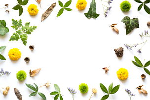 边框,自然,种子,常春藤,植物学,纯净,白色背景,绿色,黄色,叶子