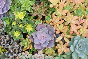 组物体,肉质植物,仙人掌,锅,美,水平画幅,无人,荆棘,夏天,特写