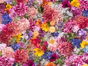 仅一朵花,围墙,背景,停车楼,特写,花纹,花头,美,贺卡,留白