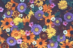 纹理,背景聚焦,美,水平画幅,高视角,秋天,无人,草夹竹桃属,俄罗斯,植物