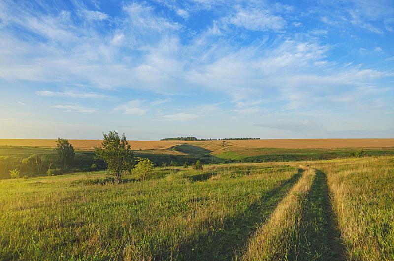夏天,山,树林,田地,陆地,绿色,地形,乡村路,自然美,农业