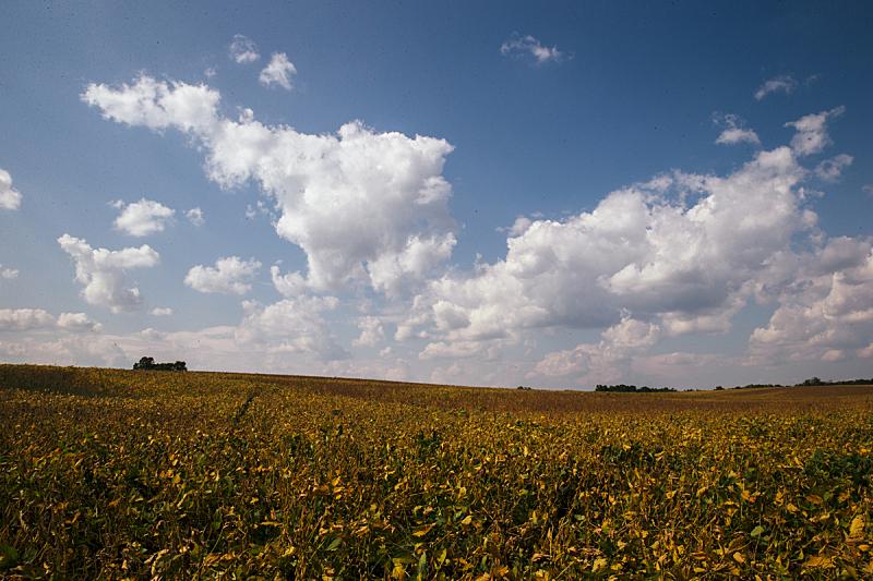 印地安娜,大豆,农作物,田地,布卢明顿,西,天空,美国,水平画幅,地形
