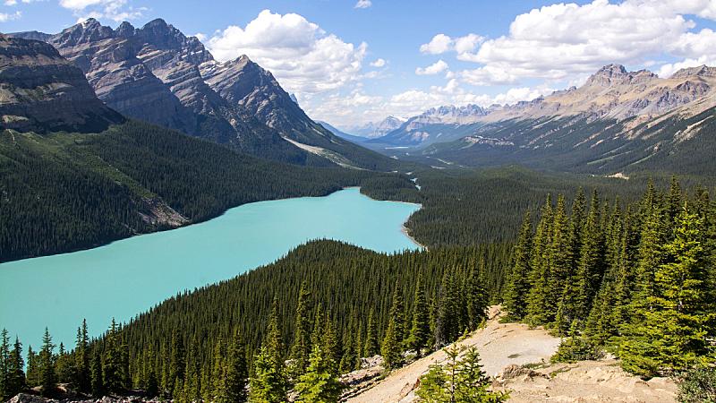 班夫国家公园,阿尔伯塔省,加拿大,阿塔巴斯卡瀑布,杰士伯公路,阿尔卑斯湖荒野地,平投湖,弓湖,梦莲湖,弓河
