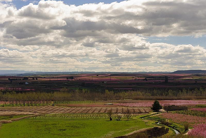 梨树,白色,粉色,春天,花朵,日光,地形,云,晚樱科,花