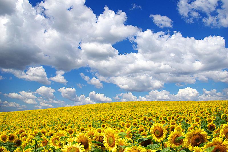 地形,自然,天空,草地,水平画幅,无人,乌克兰,户外,田地,植物