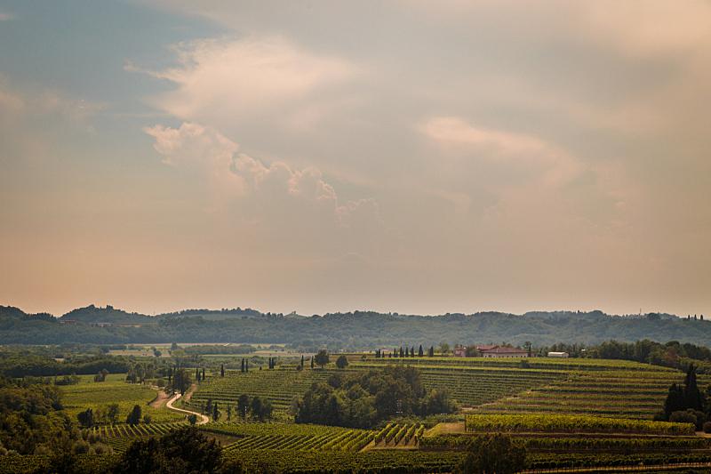 暴风雨,葡萄园,在上面,葡萄酒,天空,气候,考利乌尔,夏天,密码,农作物