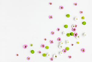 边框,白色背景,多色的,多样,留白,水平画幅,玫瑰,花蕾,植物,清新