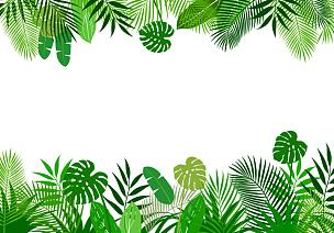 边框,背景,热带灌木,华丽的,热,太平洋岛屿,热带气候,环境,环境保护,干酪藤