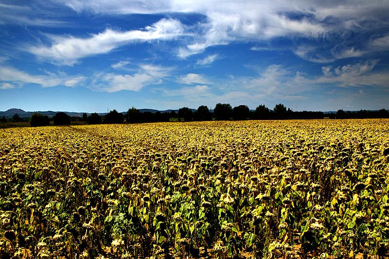 托斯卡纳区,山楂,自然,水平画幅,绿色,地形,欧洲,户外,农作物,田地