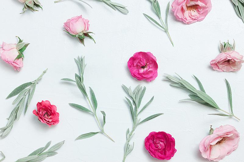 玫瑰,粉色,自然美,粉色背景,动物头,周年纪念,贺卡,热情,纺织品,边框