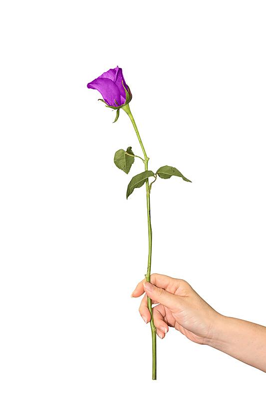 想法,单茎玫瑰,接力赛,垂直画幅,符号,健康,玫瑰,生日,花束,白色