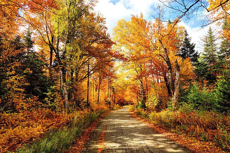 秋天,路,水平画幅,枝繁叶茂,无人,白山山脉,户外,四季,风景