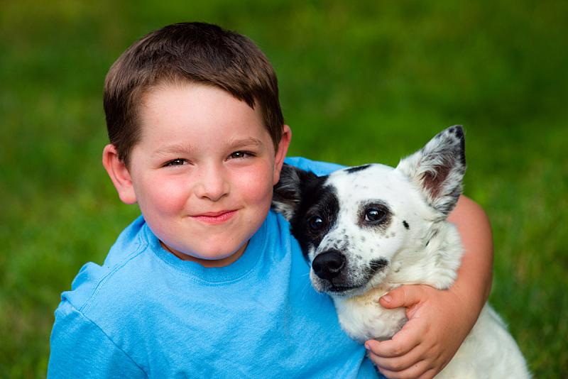 狗,儿童,澳大利亚斗牛犬,青春期,水平画幅,夏天,户外,草,男性,哺乳纲