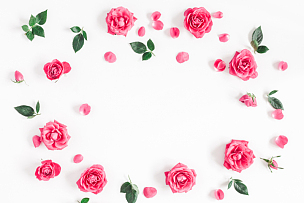 粉色,玫瑰,白色背景,视角,平铺,贺卡,情人节,夏天,生日,模板