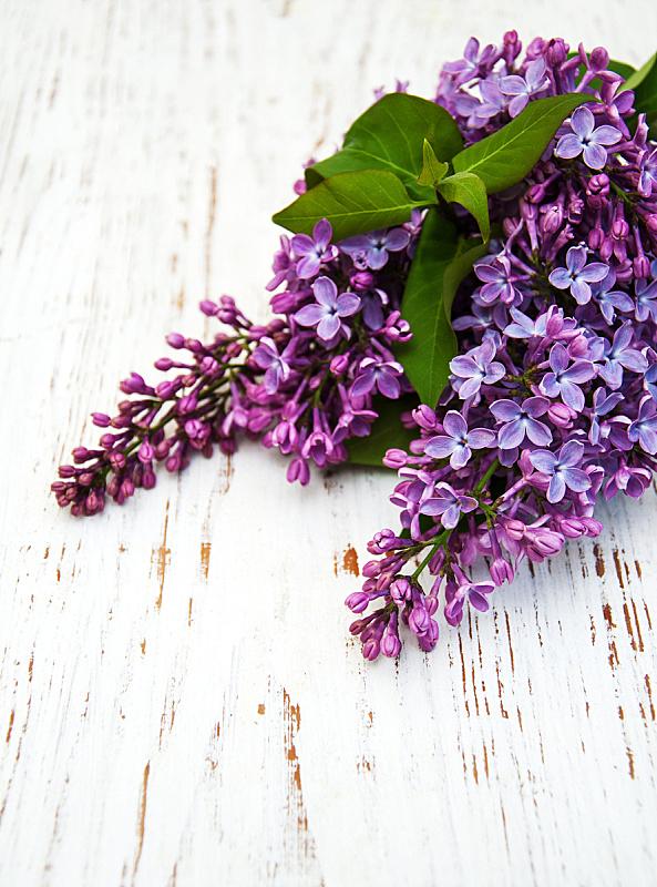 丁香花,自然,垂直画幅,绿色,木制,无人,色彩鲜艳,自然美,花,排列