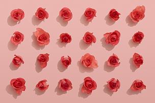 玫瑰,红色,粉色背景,贺卡,边框,水平画幅,纹理效果,无人,生日,明信片