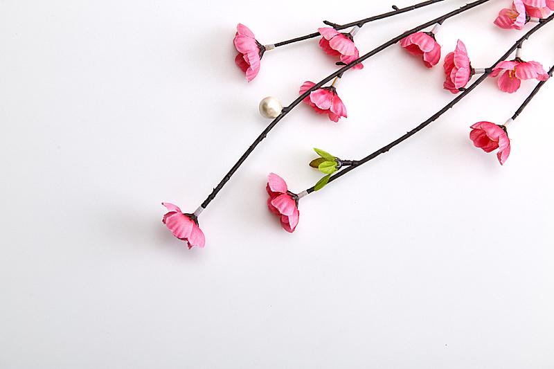 樱花,粉色,枝,白色背景,清新,自然界的状态,塑胶,泰国,樱桃,春天