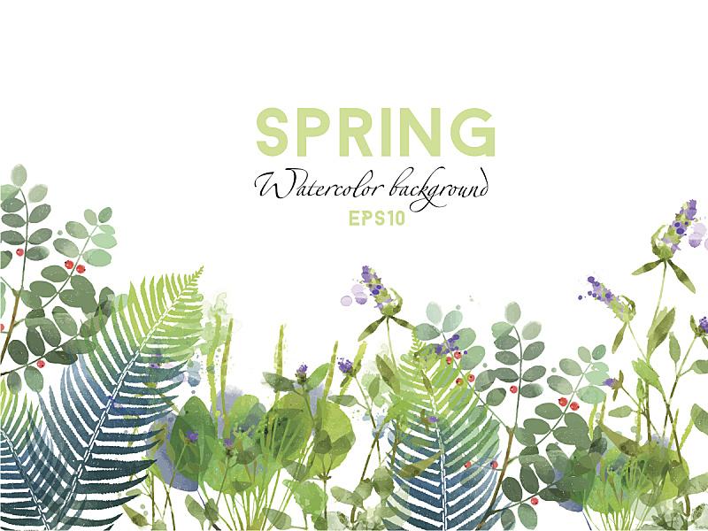 春天,矢量,背景,水彩画,水彩画颜料,美,贺卡,绘画插图,夏天