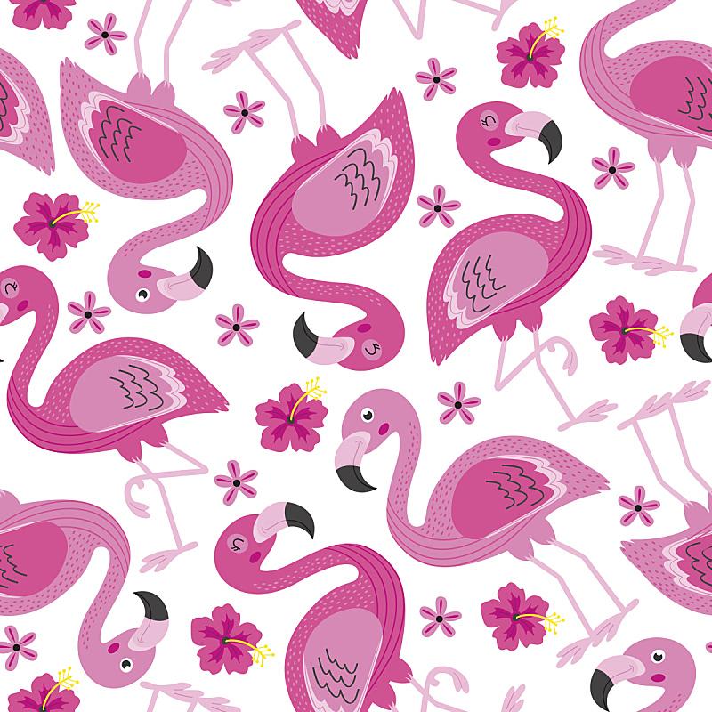 火烈鸟,四方连续纹样,粉色,木槿属,夏威夷,美,无人,绘画插图,鸟类,性格