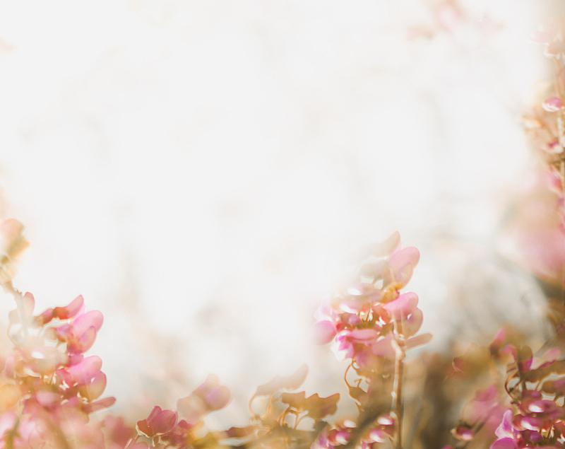 情人节卡,式样,婚礼,春天,柔和,背景,模板,彩色蜡笔,花,复古