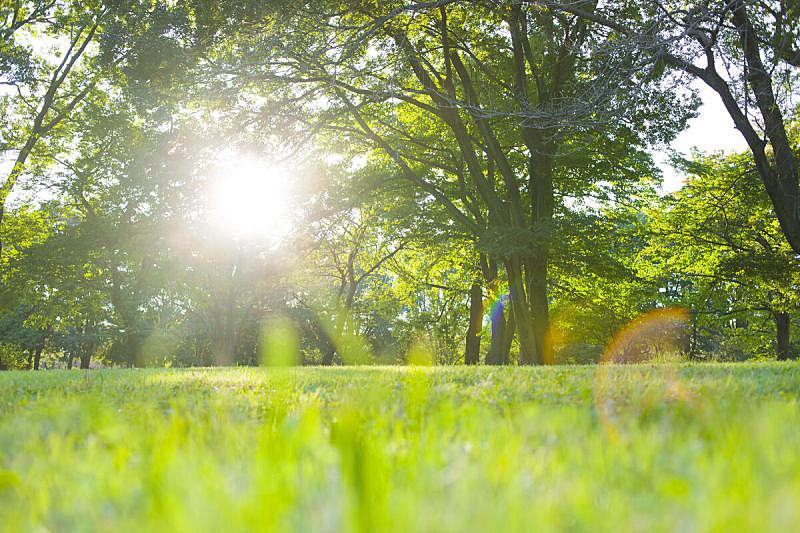 早晨,公园,白三叶草,野餐,主页,广场,天空,里山,枝繁叶茂,草坪