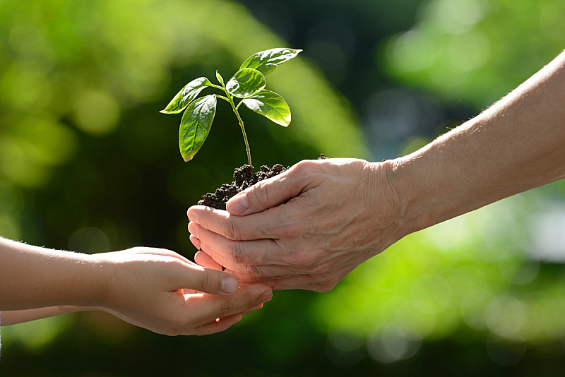青年人,植物,农业,秧苗,环境保护,豆芽,拿着,栽培植物,古老的,老年人