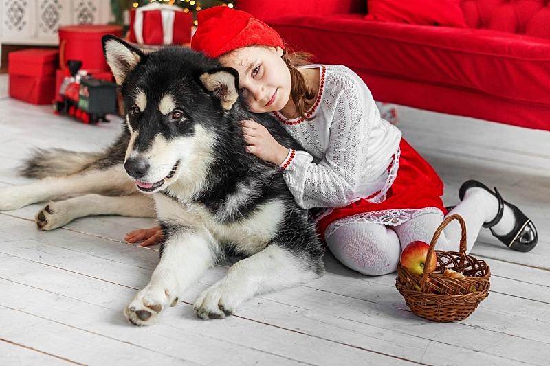 狗,儿童,古服装,巨大的,小红帽,艺术家,新的,居住区,口络,沙发