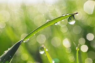 露水,水滴,雨滴,草,湿,刀刃,水,叶子,早晨,完美