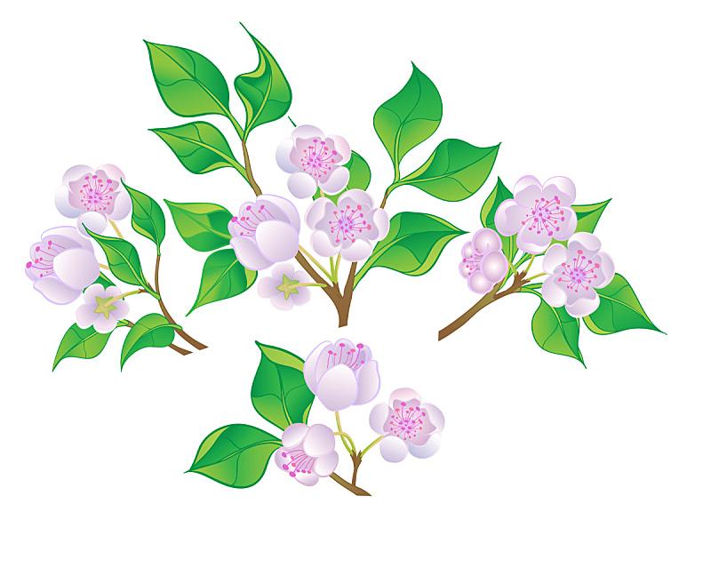 枝,花朵,山茱萸花,杏花,桃花,梅花,苹果花,褐色,水平画幅,樱花